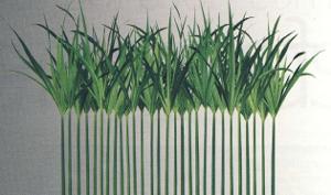 plantes-vertes-blog