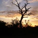 vue du Botswana