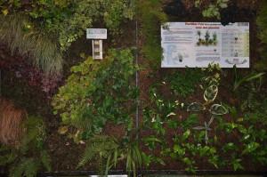 les spécialistes du mur végétal...