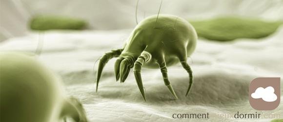 Allergie acariens - Lutter contre les acariens ...