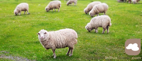 la laine est-elle toujours naturelle