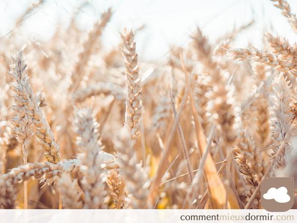 Les oreillers bio créés par les coproduits agricoles